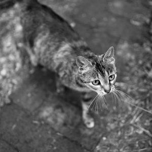 © Andrei Infinit . infi.ro . p9
